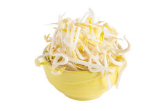 Bean sprout Royalty Free Stock Photography