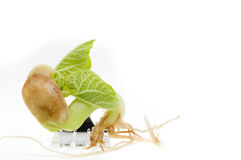 Bean sprout food over white Royalty Free Stock Images