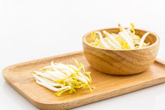 Bean sprout. Stock Images