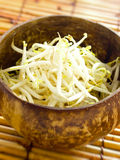 Bean sprouts Royalty Free Stock Image