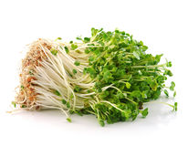 Bean Sprouts Stock Photography