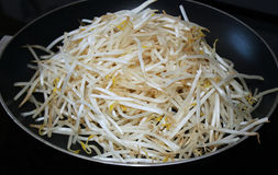 Bean Sprouts Stockbild