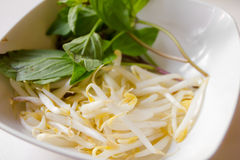 Bean sprouts Stock Photo