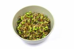 Bean Sprouts Fotografía de archivo libre de regalías