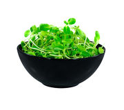 Bean Sprouts Royalty Free Stock Images