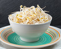 Bean Sprouts of black slate tray. Plate of bean sprouts of black slate tray Royalty Free Stock Image