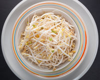 Bean Sprouts of black slate tray. Plate of bean sprouts of black slate tray. Top view food photography Stock Photos