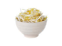 Bean sprouts in bowl on white Royalty Free Stock Photography
