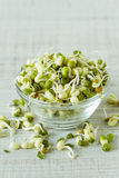Bean sprouts in a glass  bowl Royalty Free Stock Images