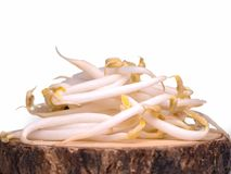 Bean Sprouts  healthy food. Bean Sprouts  healthy food .with free space for text Stock Photos