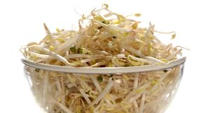 Bean sprouts stock video