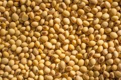 Bean in Thailand Lizenzfreie Stockbilder