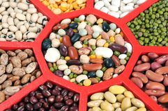 Bean in tray Stock Images