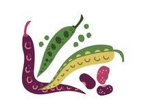 Bean Varieties Fresh Vegetable verde, alimento nutritivo orgânico do vegetariano para a ilustração do vetor da dieta saudável ilustração do vetor