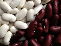 Beans. Red and white beans Royalty Free Stock Photos
