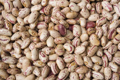 Beans. Macro image of a group of raw beans Royalty Free Stock Images