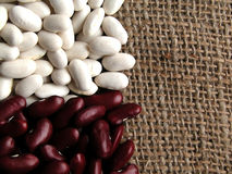 Beans. Red and white beans Royalty Free Stock Images