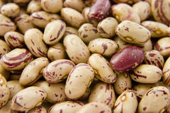 Beans 12 Stock Photos