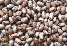 Beans. Lots of beans without pods Stock Photography