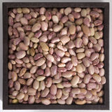 Beans. Inside a squared container royalty free stock image