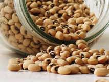 Beans 2 Stock Image