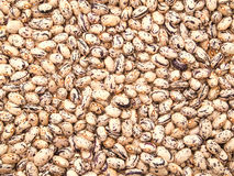 Beans. Royalty Free Stock Images