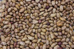 Beans. A ecological kidney beans background royalty free stock photos