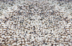 Beans. Fresh raw white beans closeup Stock Photos