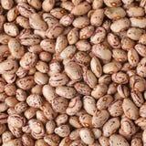 Beans. Macro shoot of beans texture Royalty Free Stock Photos