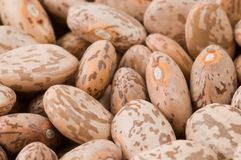 Beans. Extreme close-up of raw dried beans, isometric view Royalty Free Stock Photos