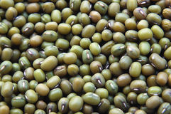 Free Beans Stock Photos - 6910893