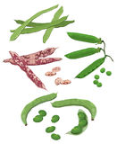 Beans. Clip-arts of various beans stock illustration