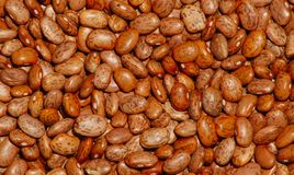 Beans. Up close royalty free stock images