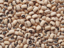 Beans background Royalty Free Stock Images