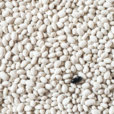 Beans. Black and white food pattern texture stock images