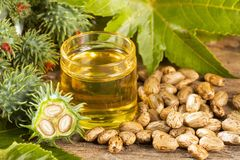 Beans and castor oil - Ricinus communis. Seeds and castor oil - Ricinus communis royalty free stock photography