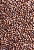 beans coffee Стоковое Изображение RF
