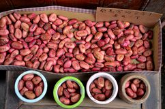 Beans with cute English and Chinese messages Royalty Free Stock Photography