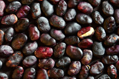 Beans on a dark background. Ripe seeds beans on a dark background royalty free stock photography