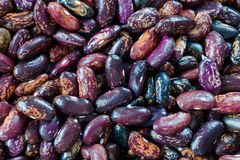 Beans of dark purple color with stripes of sorts Railroad, Selugia, Idaho Refuge. Stock Photography