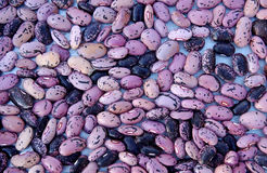 Beans. Drying freshly harvested beans on a platter royalty free stock images