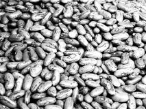 Beans royalty free stock image