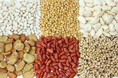 Beans Family Stock Image