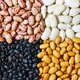 Beans in four colors royalty free stock photography