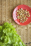 Beans germs. Germs in a plate, healthy live food photo with copy space for text Royalty Free Stock Photos