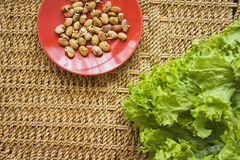Beans germs. Germs in a plate, healthy live food photo with copy space for text Stock Photos