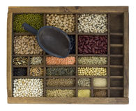Beans, grain, sseeds in typesetter case with scoop Royalty Free Stock Photography