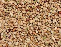 Beans grains Royalty Free Stock Photo