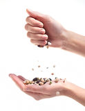 Beans in Hands Royalty Free Stock Image