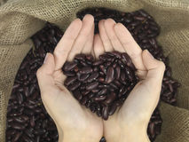 Beans heart. Beans in heart shape held in hands over a raffia bag Stock Image